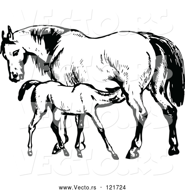 Vector of Retro Vintage Black and White Mare Horse and Colt