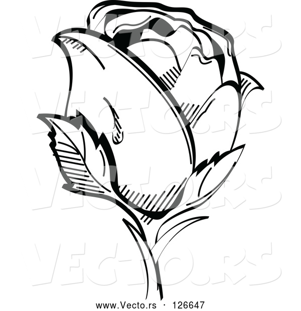 Vector of Single Black and White Rose