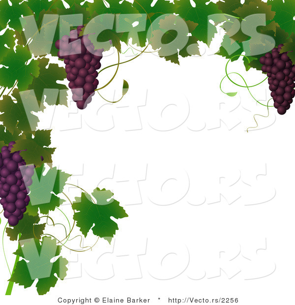 Vector of Vines and Purple Grapes Border Design