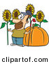 Vector of a Proud Cartoon Farmer with a Green Thumb Standing Beside His Big Sunflowers and Pumpkin by Ron Leishman