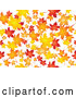Vector of Background of Orange, Red and Yellow Maple Leaves Falling over White by KJ Pargeter