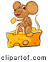 Vector of Brown Cartoon Mouse Eating and Sitting on a Cheese Wedge by Graphics RF