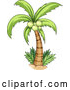 Vector of Cartoon Coconut Palm Tree by Graphics RF