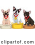 Vector of Cartoon Show French Bulldogs on Placement Podiums by Pushkin