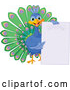 Vector of Cute Happy Peacock Holding a Blank Sign by Pushkin