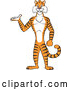 Vector of Happy Cartoon Tiger Presenting and Standing Upright by Cartoon Solutions