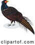Vector of Retro Pheasant Bird by Patrimonio