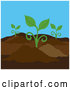 Vector of Seedling Plants Growing in a Garden by Pams Clipart