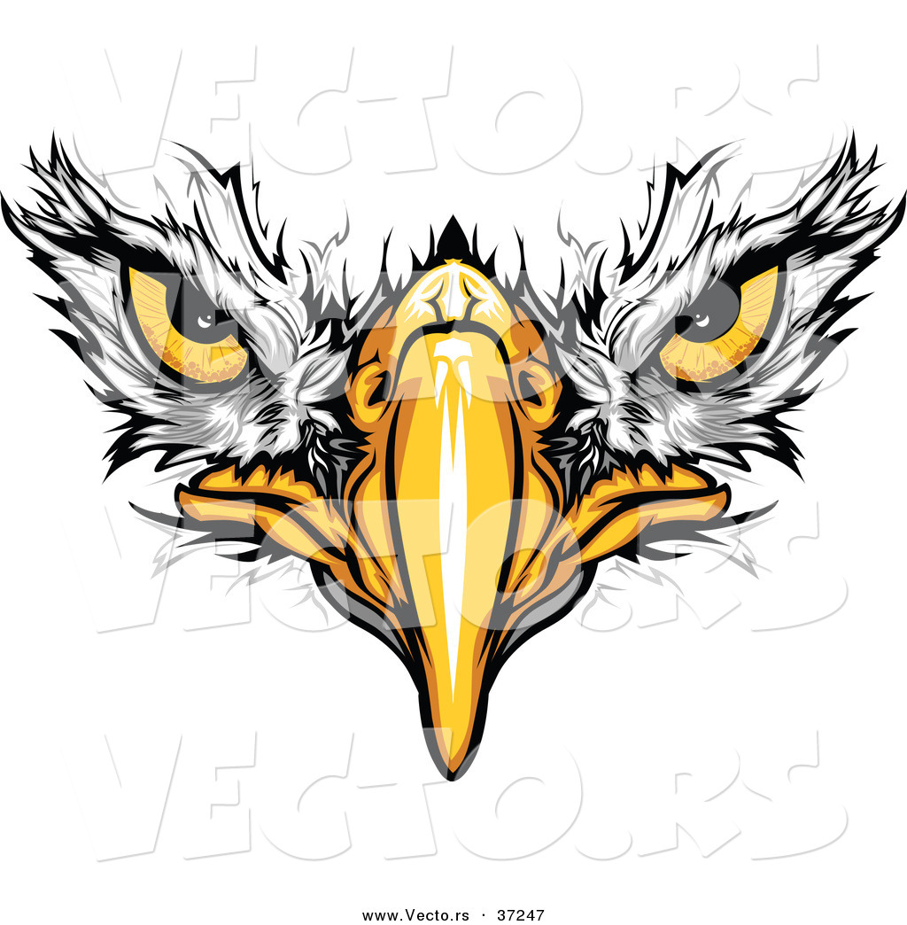 cartoon vector of bald eagle face with fearless eyes intensely