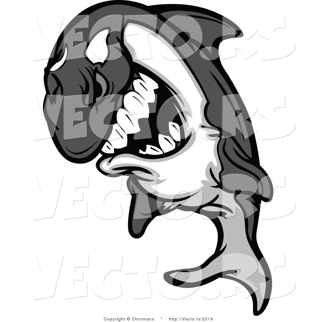 vector of a competitive cartoon killer whale orca mascot grinning