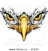 Cartoon Vector of Bald Eagle Face with Fearless Eyes Intensely Staring by Chromaco