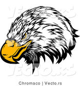 Vector of a Bald Eagle with Intimidating Eyes by Chromaco