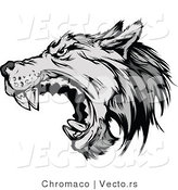 Vector of a Defensive Gray Wolf Attacking by Chromaco