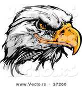 Vector of a Fearless Cartoon Styled Bald Eagle Mascot Head by Chromaco