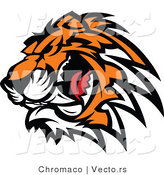 Vector of a Ferocious Tiger Mascot Preparing to Attack While Growling by Chromaco