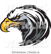Vector of a Focused American Bald Eagle by Chromaco