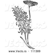 Vector of Black and White Herbal Fennel Plant by Picsburg