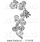 Vector of Black and White Woodcut Herbal Medicinal Ground Ivy Plant by Picsburg