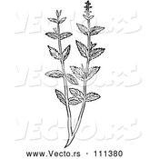 Vector of Black and White Woodcut Herbal Mint Plant by Picsburg