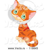 Vector of Cartoon Ginger Kitten Wearing a Cone Elizabethan Collar by Pushkin