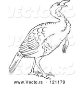 Vector of Cartoon Retro Vintage Black and White Gobbler Thanksgiving Turkey Bird Line Drawing by Picsburg