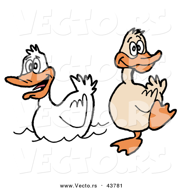 Cartoon Vector of a Brown Duck Waddling on Land Beside a White Duck on Water