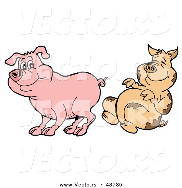 Cartoon Vector of a Dirty Pig Laughing at Undirty Pig