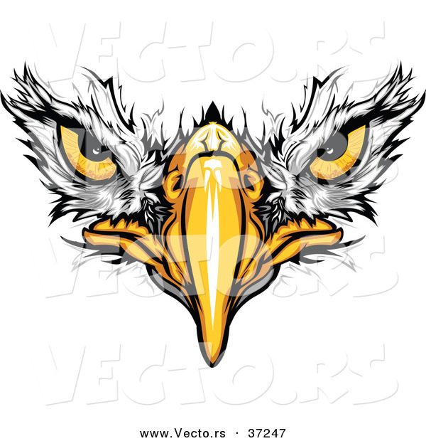 Cartoon Vector of Bald Eagle Face with Fearless Eyes Intensely Staring