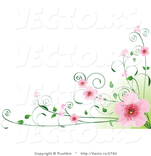 Vector of Pink Cherry Blossoms on Vines over Green and White Background Border Design