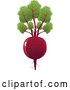 Vector of a Red Beet with Leaves by Tonis Pan