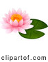 Vector of Pink Water Lily Lotus over a Green Pad by Graphics RF